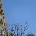 Devils Tower Eagles