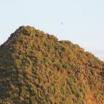 Haystack Rock is teeming with seabirds