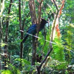 A Stellars Jay entertained me while I walked on the bottom part of the trail