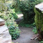 In places, the trail is cut through the logs of fallen redwoods